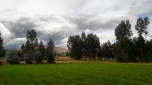 Los árboles de eucalipto abundan en Huancayo que hacen del olor del ambiente algo especial