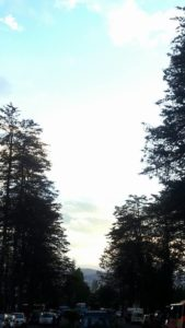 Árboles de eucalipto en Ocopa