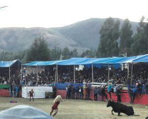Toro match en San Pedro de Saño