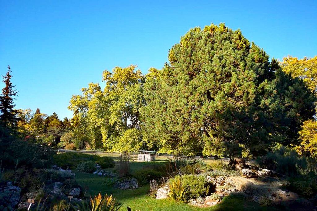 Qué hacer en Ginebra en 2 días: jardín botánico