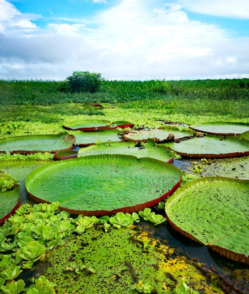 Turismo en Iquitos: fabulosas victorias regias