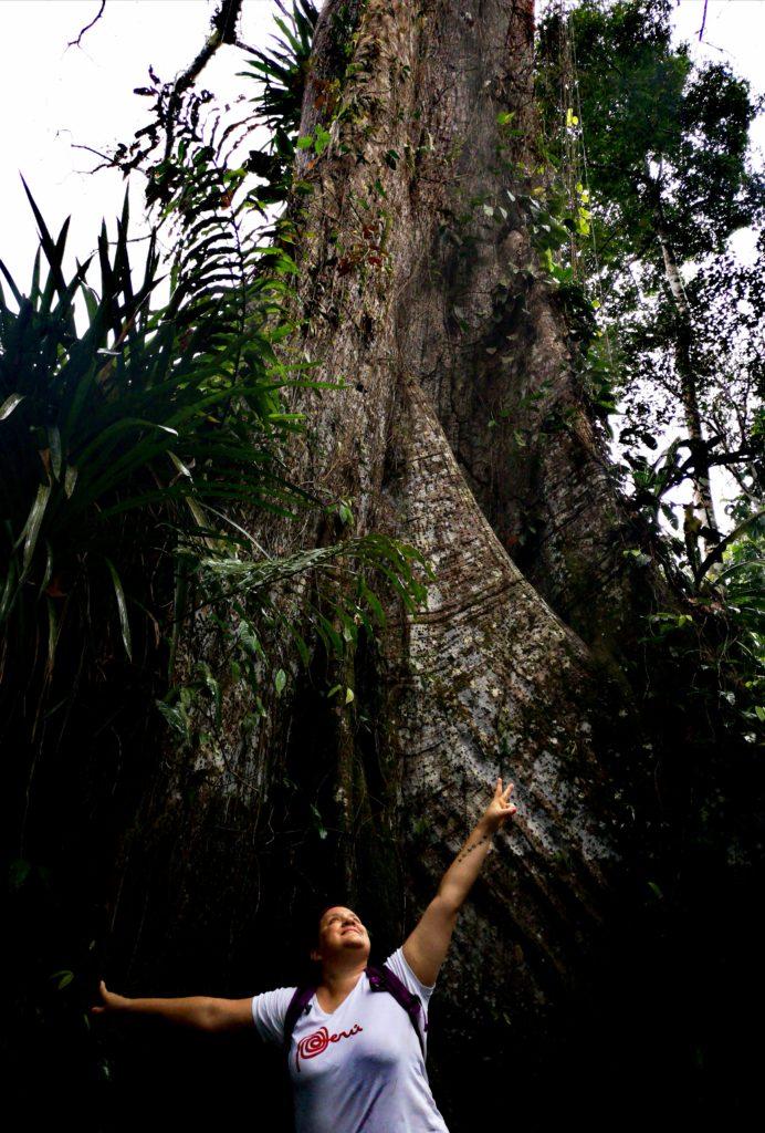 Gran árbol ceiba